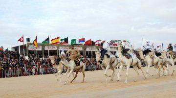 camel racing betting
